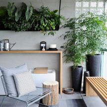 Комнатные растения и цветы в интерьере