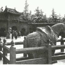 3-х сторонние конструкции для амбара для лошадей — легкий и экономичный убежище для лошади
