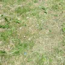 Восстанавливаем газон.